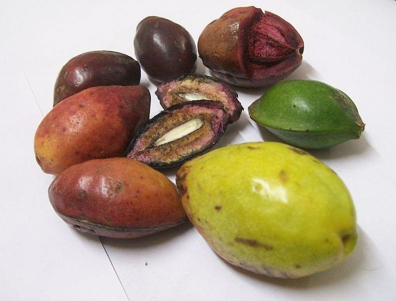 almond farmers in nigeria